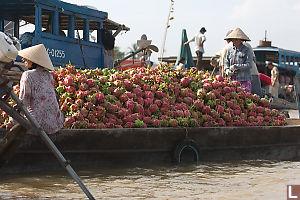 Boat Full Of Dragon Fruit