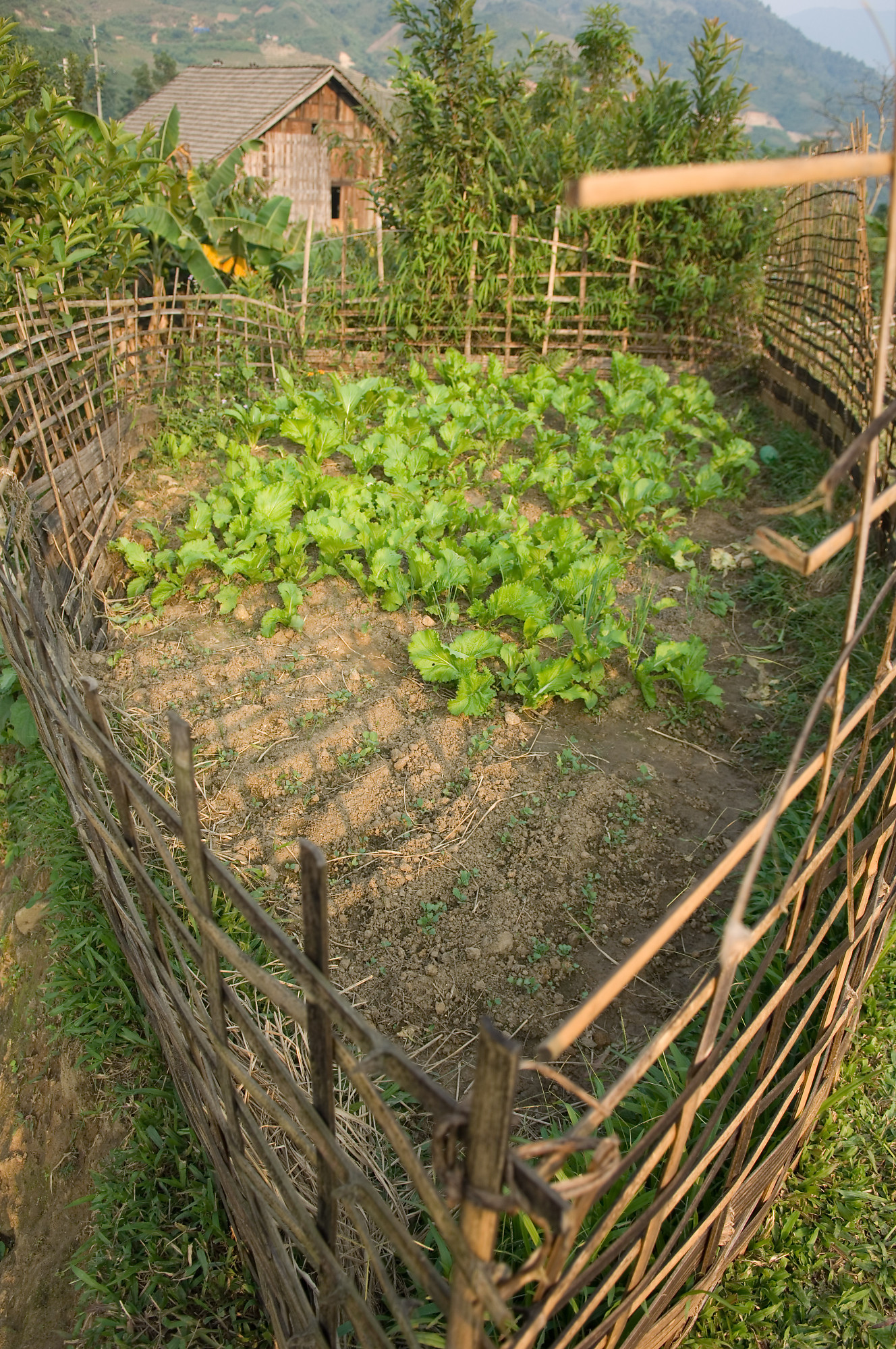 Small vegetable patch for Vegetable patch