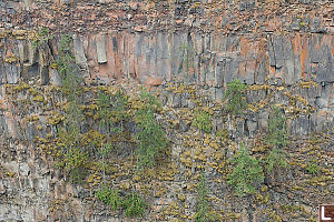Layers Of Basalt And Confused Trees