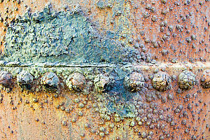 Crusty Bolts On Side Of Donkey