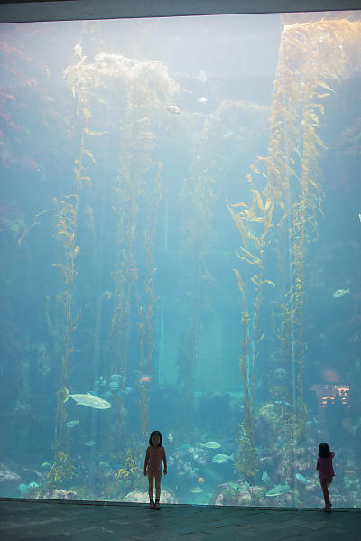 Kids At The Kelp Forest